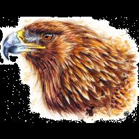 SM Adler | eagle