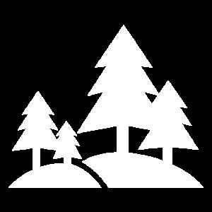 Landschaft Nadelwald