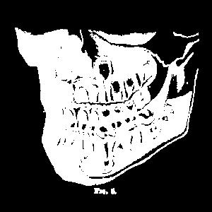 Zahn Kiefer