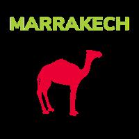 Kamele in Marrakech Marrakesch Kamel