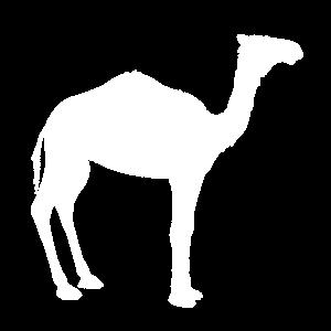 Wüstenkamel