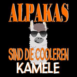 Alpakas sind die cooler Kamele - lustiger Spruch