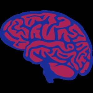 Gehirn Gehirn 1 1
