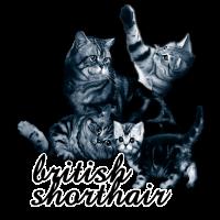 Katze Brite1