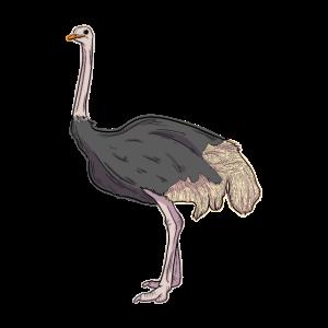 Strauß-Illustration