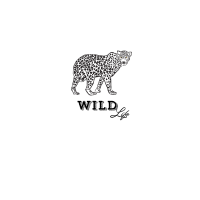 leopard wild life