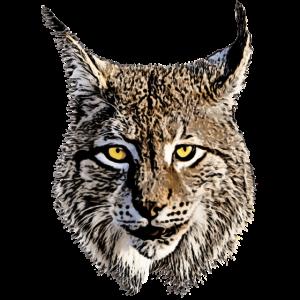 Luchs Raubkatze Raubtier Tier coole Katze Lynx