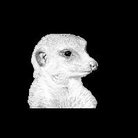 Erdmaennchen Meerkat