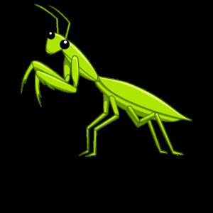 Gottesanbeterin Betend Insekt Entomologe
