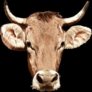 Kuh Kopf Bauernhof Tier Bauer Landwirt Kühe Vieh