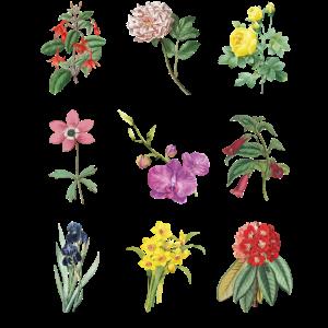 Vintage Botanical Floral Flower T-Shirt