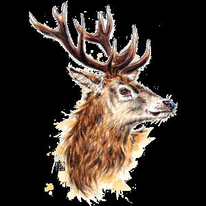 SM Hirsch | stag