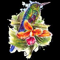 SM Kolibri | hummingbird