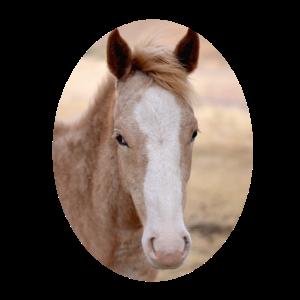 junges Pferd Fohlen