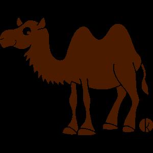 Kamel (c) - Trampeltier