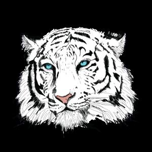 Schwarz Weißer Tiger Kopf mit blauen Augen