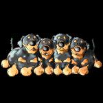 Lustiges Rottweiler Quartett - Hund