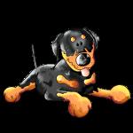 Knuffiger Rottweiler - Hund