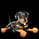 Süßer Rottweiler - Hund