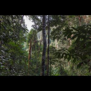 Jungel Urwald in Thailand Chiang Mai