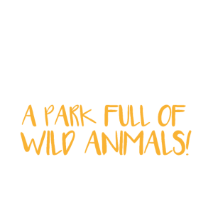 Lehren Spaziergang Park mit wilden Tieren Geschenk