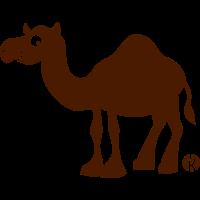 Kamel - einhöckrig (c)