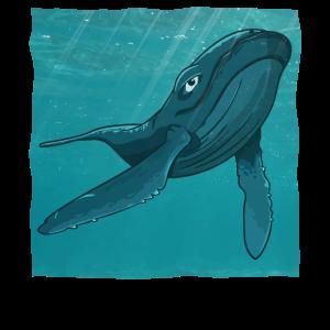 Wal Buckelwal Im Meer