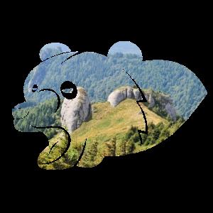 Bär Wildnis Landschaft Waldtier