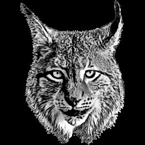 Luchs cooles Tier cool Raubkatze Raubtier Lynx