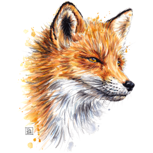 SM Fuchs | fox