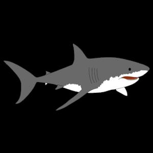 Großer weißer Hai 2