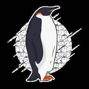 Pinguin Kaiserpinguin