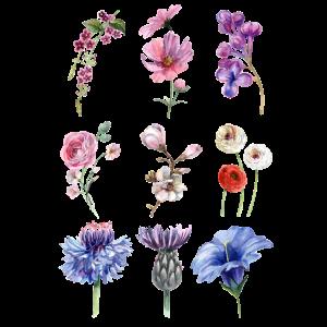 Blume, Blumen, Blumenmotiv, Aquarell, Wasserfarben