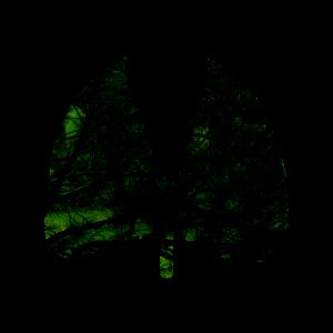 grün schwarze Lunge