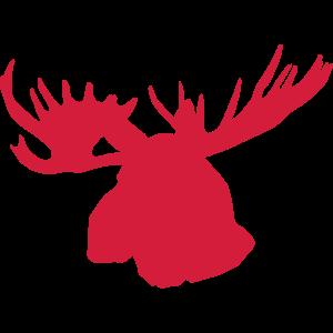 elch - moose - elk - kanada - canada
