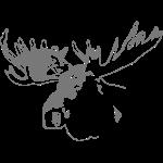 elch - elk - moose - jagd - jäger