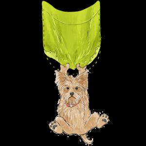 Geliebter Taschenhund