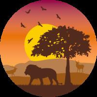 Afrika Savanne Löwe Sonnenuntergang