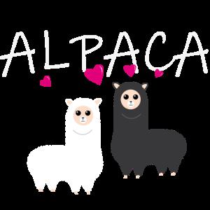 Alpaca love Alpaka