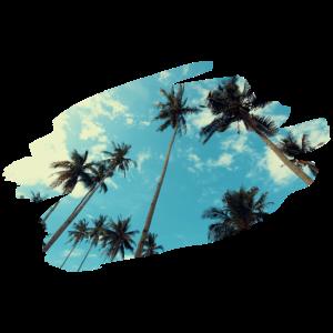 Urlaub Palmen blauer Himmel Strand Geschenk Idee