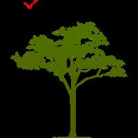 Plantons des arbres
