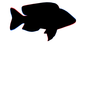 Fisch Fischen
