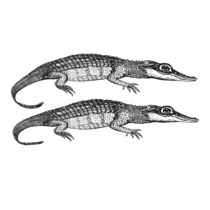 Zwei Alligatoren KROKODILE