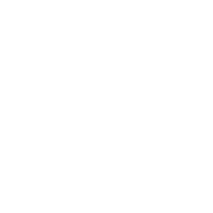 Lotusblume weiß