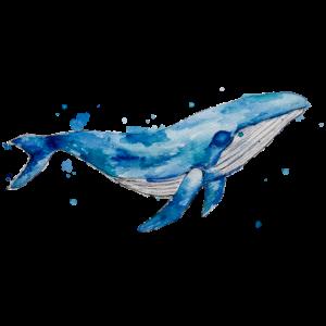 Blauwal Design