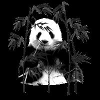 Panda Bamboo Giant Mammal Species Animal Gift