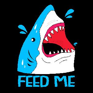 Hai Fisch Haifisch Haifischflosse Haie Ozean