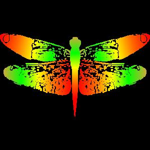 Libelle Regenbogen Insekt Natur Geschenk