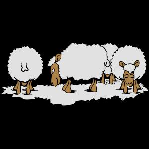 SCHAF Herde