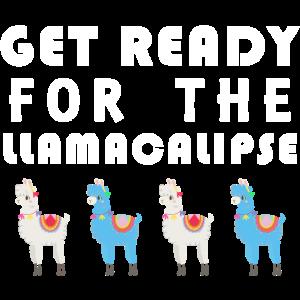 Machen Sie sich bereit für die LLAMACALIPSE. Lama. Alpaca.Lama